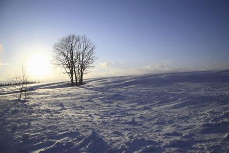 snowy field: Sun and snowy field tree