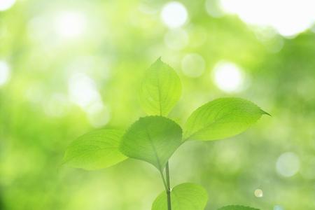 Fresh greenery and sunshine, Stock Photo