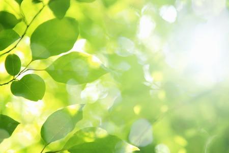 新鮮な緑と日の光 写真素材