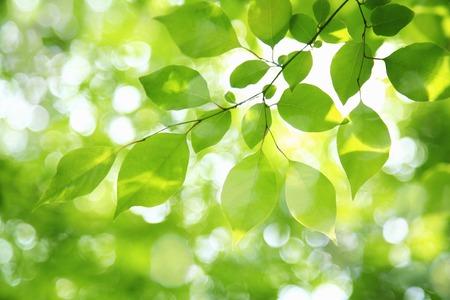 신선한 녹색 스톡 콘텐츠