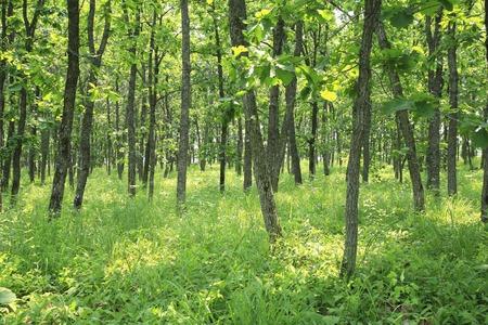 가시와 숲