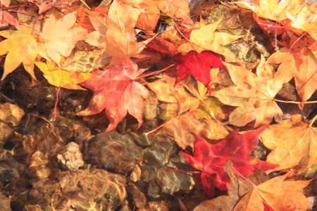 sinks: Fallen leaves that sinks in water Stock Photo