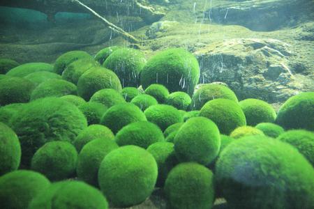 spherical: Spherical moss