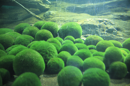 spherical: Spherical moss