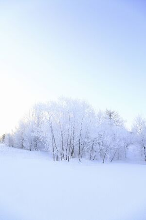 asia nature: Rime of the Snowfield.