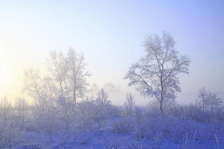 amanecer: Rime del Campo de nieve.