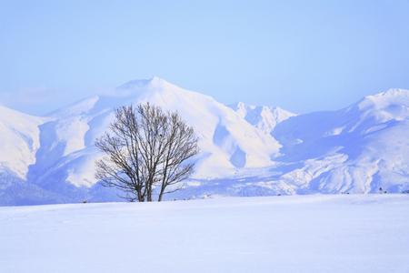 snowfield: Snowfield trees and Tokachi mountain range Stock Photo