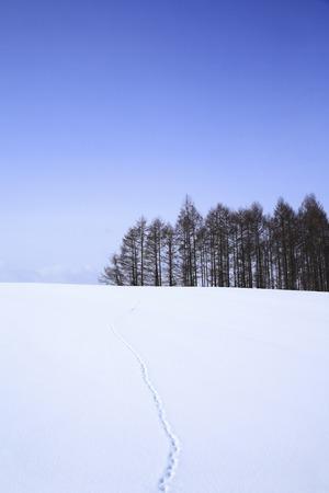 snowfield: Snowfield with footprints