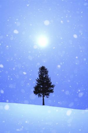 snowy field: One tree of a snowy field