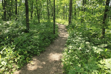 straight path: Promenade of forest