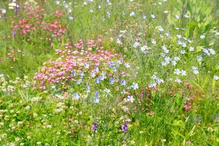 blooming: Blooming Prairie Stock Photo
