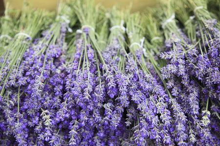 Lavender Banco de Imagens