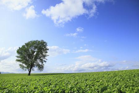 philosophical: Philosophical tree