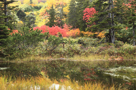 heavy snow: Heavy snow plateau swamp of autumn leaves sumo ring Swamp