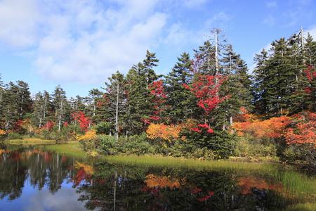 heavy snow: Heavy snow plateau swamp of autumn leaves green marsh