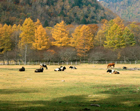 chacra: Mitsunori otoño rancho