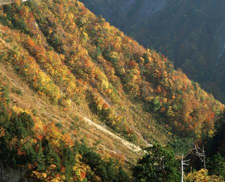 hakusan: Autumn leaves