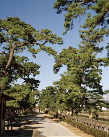 treelined: Hundred election Nikko Kaido Soka pine tree-lined Japanese way