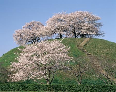 empty tomb: Cherry round Tomb tumulus