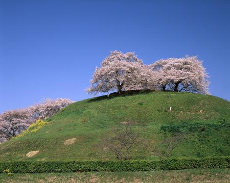 tumulus: Cherry round Tomb tumulus