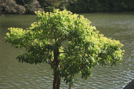 andromeda: Fresh green of andromeda