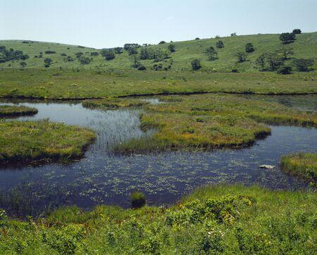 wetlands: Yashima wetlands Stock Photo
