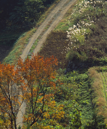 hakusan: Fall of Hakusan super forest road Stock Photo