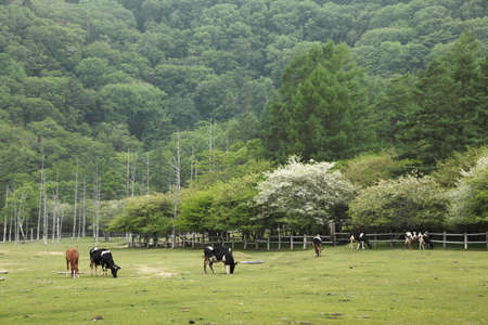 chacra: Mitsunori rancho