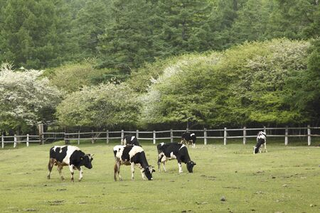 rancho: Mitsunori rancho