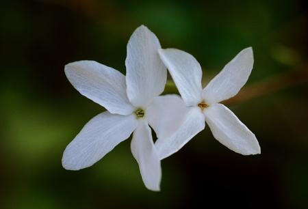 花と植物 写真素材