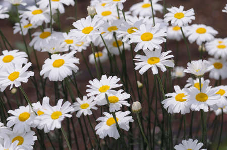 medicated: Flowers and plants Stock Photo