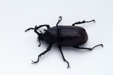 living thing: Beetle male