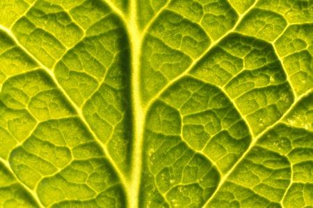it: It leaves primrose