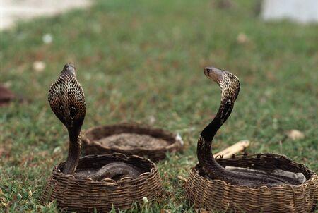 serpiente cobra: Funcionamiento de la calle de la cobra