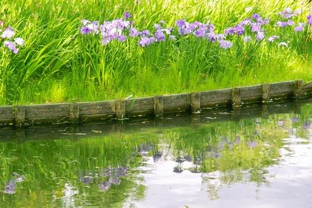 waterside: IRIS.