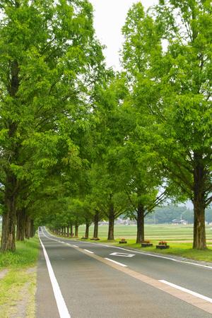 treelined: Treelined Stock Photo