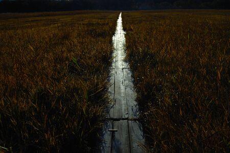 wetlands: Tashiro wetlands