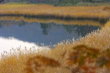 waterweed: Onuma