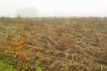 Desolate field