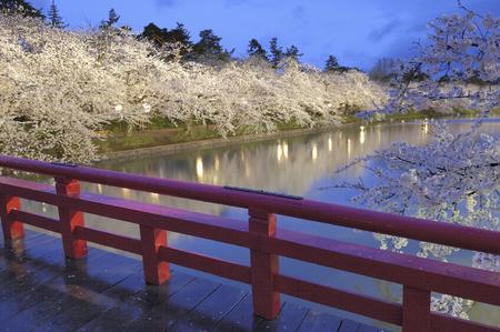 fleurs de cerisiers: Cherry blossoms Banque d'images