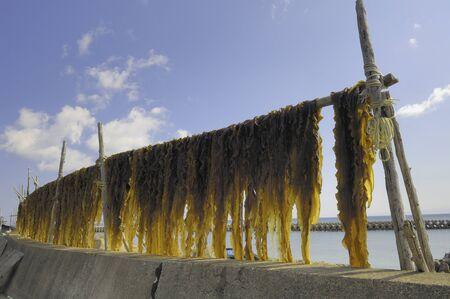 alga marina: Algas secas