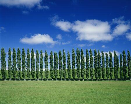 treelined: Ranch and the poplar tree-lined