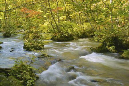 mountain stream: Oirase mountain stream and