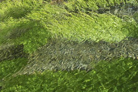 algae: Spring water with algae
