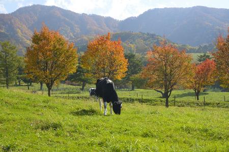 rancho: Rey tibetano Highlands Ranch