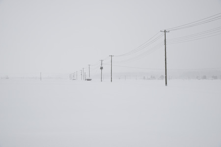 telephone pole: Snowy field telephone pole