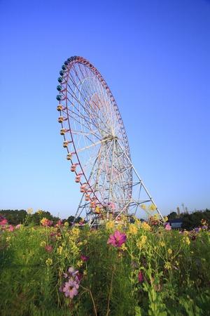 big wheel: Big wheel