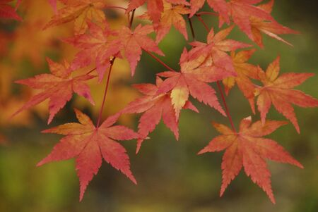 Yellow leaves and autumn leaves
