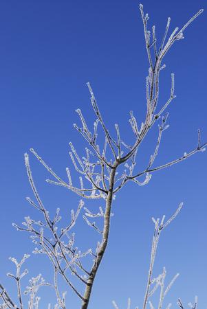 rime: Rime ice