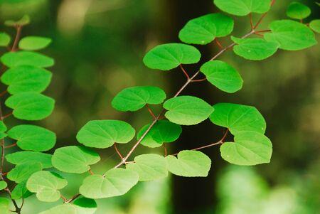 filtering: Fresh green